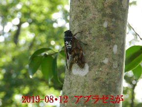 2019-08・12 里の昆虫達.JPG