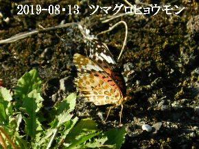 2019-08・13 今日の出遭い・・・ (4).JPG