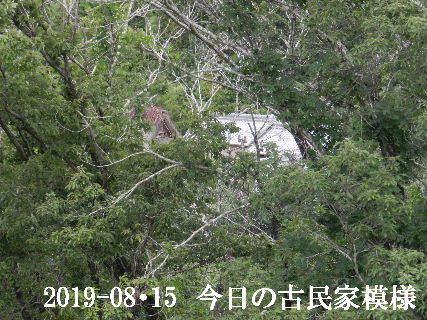 2019-08・15 今日の古民家模様.JPG