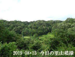 2019-08・15 今日の里山模様・・・ (3).JPG