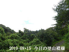 2019-08・15 今日の里山模様・・・ (5).JPG