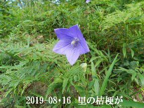 2019-08・16 今日の出遭い・・・ (1).JPG