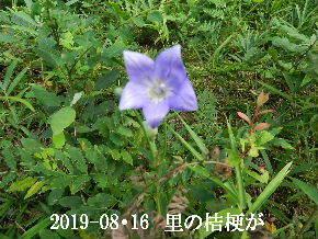 2019-08・16 今日の出遭い・・・ (2).JPG
