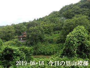 2019-08・16 今日の里山模様・・・ (6).JPG