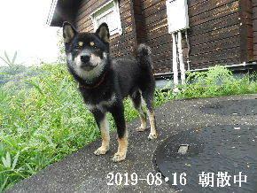 2019-08・16 今日の麻呂 (5).JPG