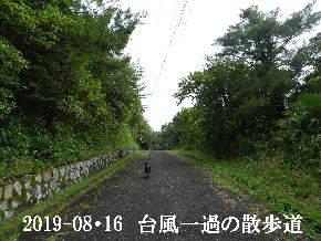 2019-08・16 台風一過の散歩道 (1).JPG