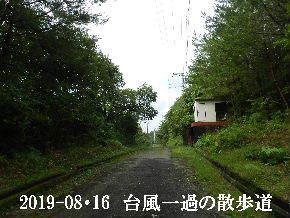 2019-08・16 台風一過の散歩道 (3).JPG