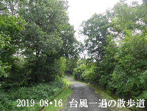 2019-08・16 台風一過の散歩道 (4).JPG
