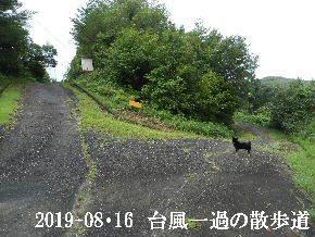 2019-08・16 台風一過の散歩道 (5).JPG