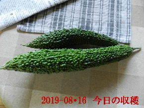 2019-08・16 我が家のスナップ・・・ (3).JPG