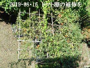 2019-08・16 我が家のスナップ・・・ (5).JPG