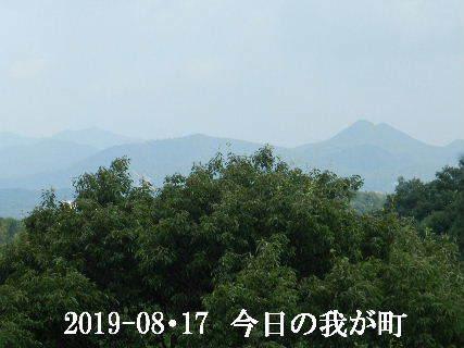 2019-08・17 今日の我が町.JPG