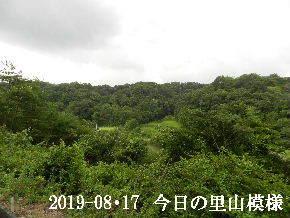 2019-08・17 今日の里山模様・・・ (3).JPG