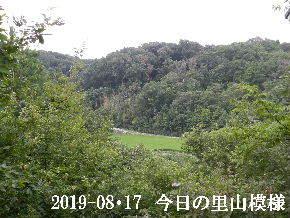 2019-08・17 今日の里山模様・・・ (4).JPG
