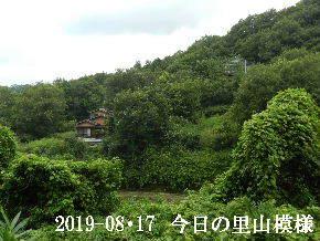2019-08・17 今日の里山模様・・・ (6).JPG