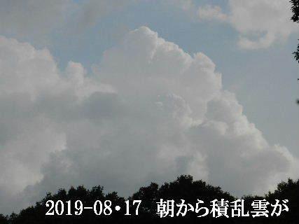 2019-08・17 今日の里山模様・・・ (7).JPG