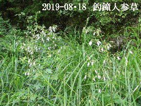 2019-08・18 今日の出遭い・・・ (1).JPG