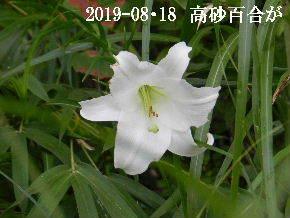 2019-08・18 今日の出遭い・・・ (2).JPG