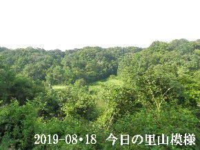 2019-08・18 今日の里山模様・・・ (3).JPG