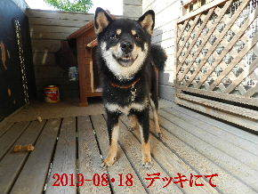 2019-08・18 今日の麻呂 (2).JPG