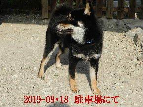 2019-08・18 今日の麻呂 (3).JPG