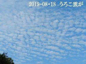 2019-08・18 里の空は秋の気配・・・ (1).JPG