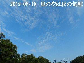 2019-08・18 里の空は秋の気配・・・ (2).JPG