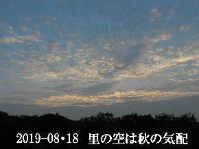 2019-08・18 里の空は秋の気配・・・ (3).JPG