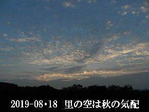 2019-08・18 里の空は秋の気配・・・ (4).JPG