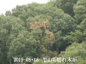2019-08・18 里山の樹木は・・・ (2).JPG