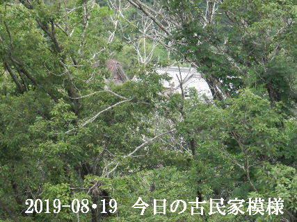 2019-08・19 今日の古民家模様.JPG