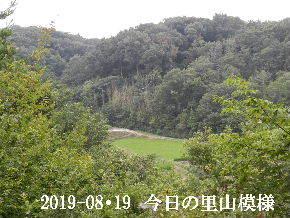 2019-08・19 今日の里山模様・・・ (4).JPG