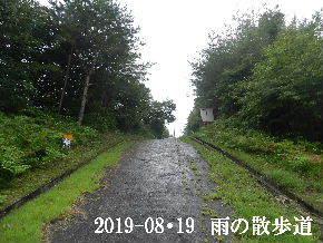 2019-08・19 雨の散歩道・・・ (2).JPG