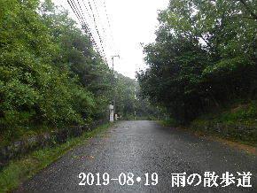 2019-08・19 雨の散歩道・・・ (5).JPG