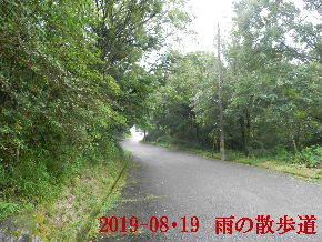 2019-08・19 雨の散歩道・・・ (6).JPG