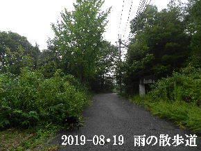 2019-08・19 雨の散歩道・・・ (7).JPG