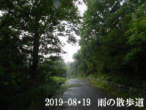 2019-08・19 雨の散歩道・・・ (8).JPG