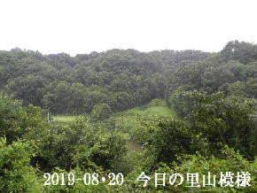 2019-08・20 今日の里山模様・・・ (3).JPG