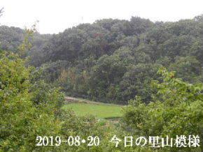 2019-08・20 今日の里山模様・・・ (4).JPG