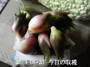 2019-08・20 我が家のスナップ・・・ (4).JPG