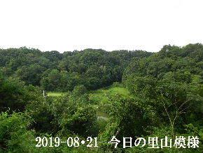 2019-08・21 今日の里山模様・・・ (3).JPG