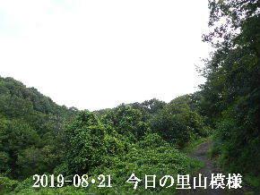 2019-08・21 今日の里山模様・・・ (6).JPG