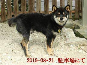 2019-08・21 今日の麻呂 (3).JPG