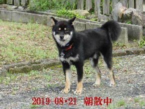 2019-08・21 今日の麻呂 (5).JPG