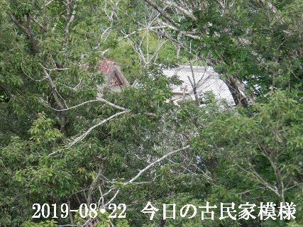 2019-08・22 今日の古民家模様.JPG