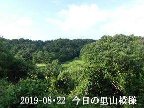 2019-08・22 今日の里山模様・・・ (2).JPG