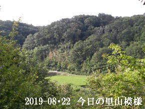 2019-08・22 今日の里山模様・・・ (3).JPG