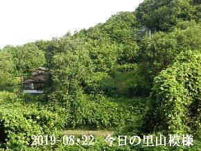 2019-08・22 今日の里山模様・・・ (4).JPG