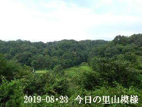 2019-08・23 今日の里山模様・・・ (3).JPG