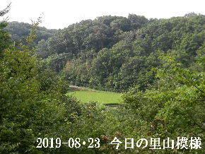 2019-08・23 今日の里山模様・・・ (4).JPG